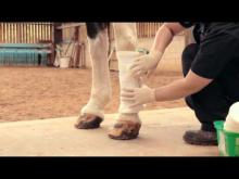 Embedded thumbnail for Leg Bandaging Training